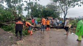 Tim Gerak Cepat Pemkab Gowa Bersihkan Pohon Tumbang