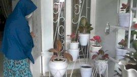 Waspada, Aksi Pencurian Tanaman Hias Terekam CCTV, Korbannya IRT di Gowa