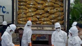 108 Ton Jahe Impor Tak Penuhi Syarat Karantina Dimusnahkan