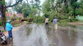 Hujan Deras dan Angin Kencang Sebabkan Pohon Tumbang di Malino