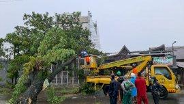 12 Titik Pohon Tumbang di Gowa, Kadis DLH: Kita evakuasi sejak Pukul 3 Dini hari