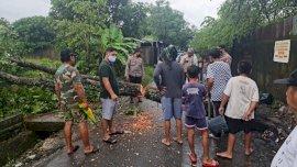 Puluhan Rumah Banjir dan Pohon Tumbang, Lurah Mangalli Siapkan Dapur Umum