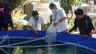Econatural dan PT Pegadaian Kanwil VI Bantu Budidaya Ikan Nila di Somba Opu