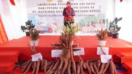 Tiga Desa di Pattallassang jadi Sentra Penghasil Singkong
